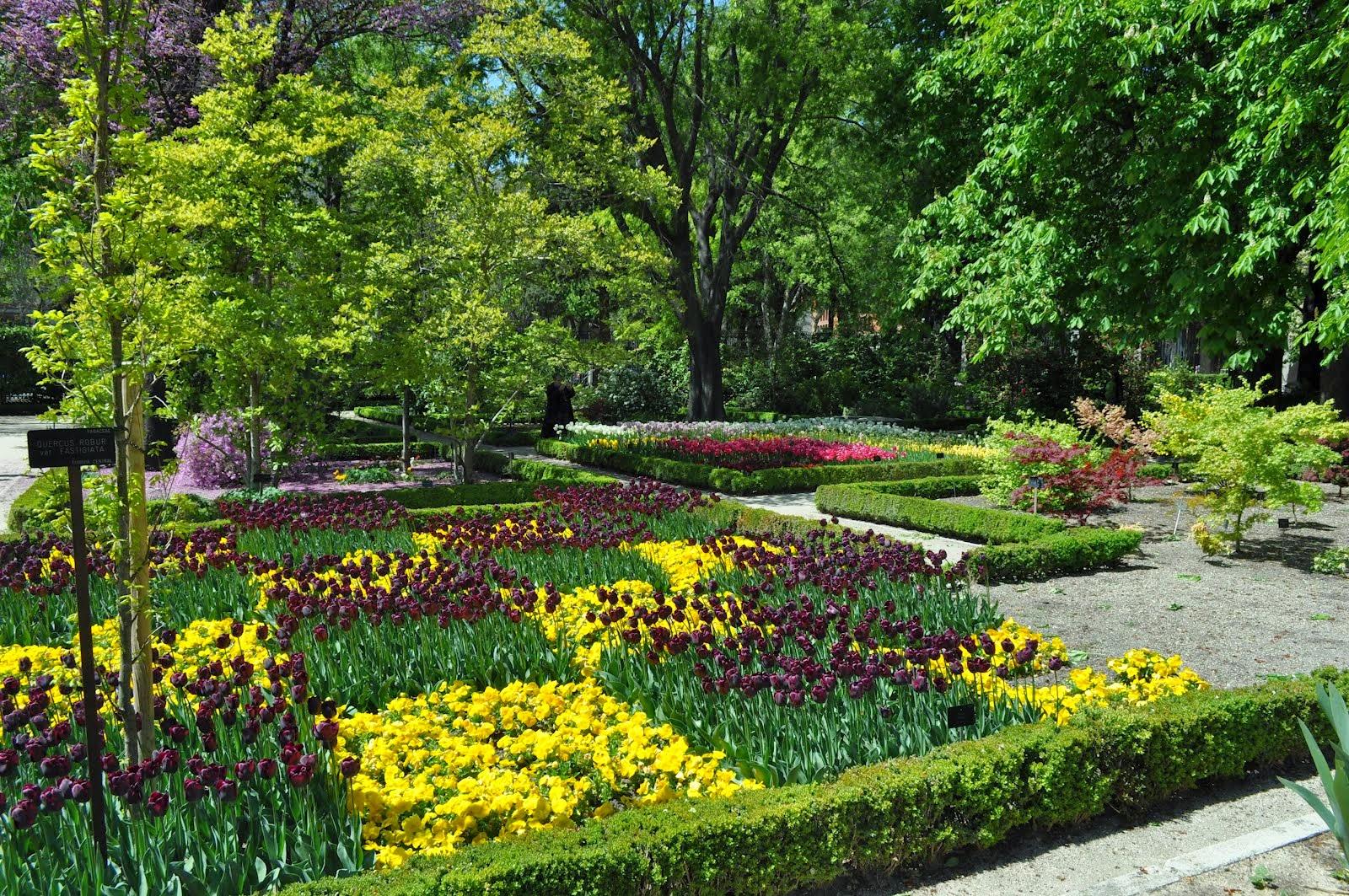 Flores do Jardim Botânico de Madri