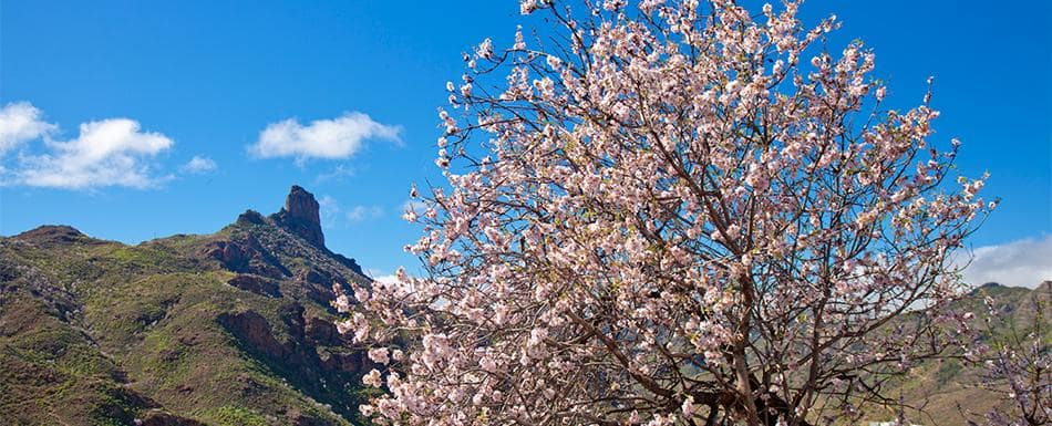 Primavera em Gran Canaria