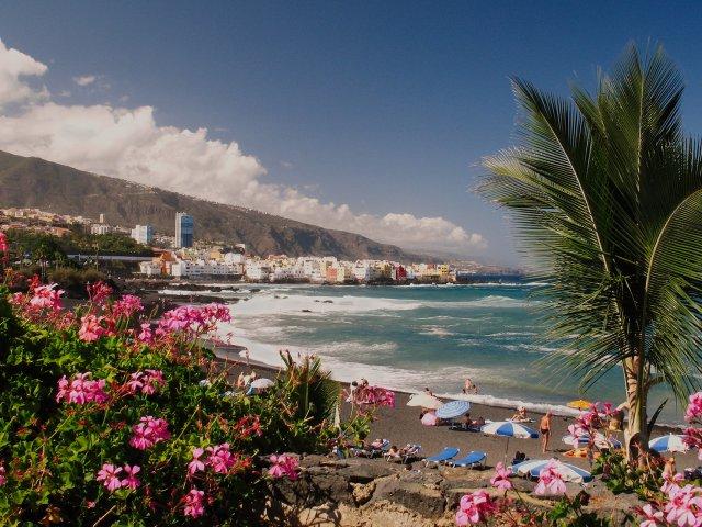Flores na Playa Jardin em Tenerife
